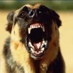 Как защититься от собак?