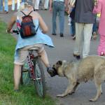 Как защититься от собак на велосипеде?