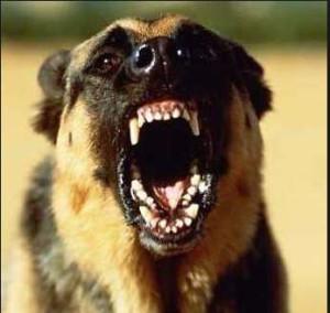 Защита от собак